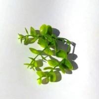 Брусничник, лист 8 см