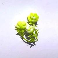 Клевер, цветок 6 см