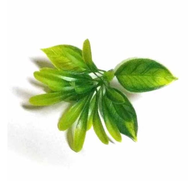 Самшит, лист зеленый комби