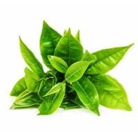 Зеленый чай СО2 экстракт, 10 мл