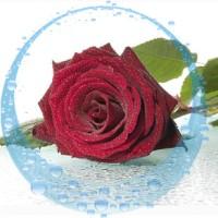 Роза, гидролат, 100 мл