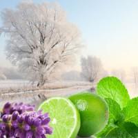 Зимний сад, ароматическое масло, 10 мл