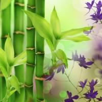 Бамбук, ароматическое масло, 10 мл