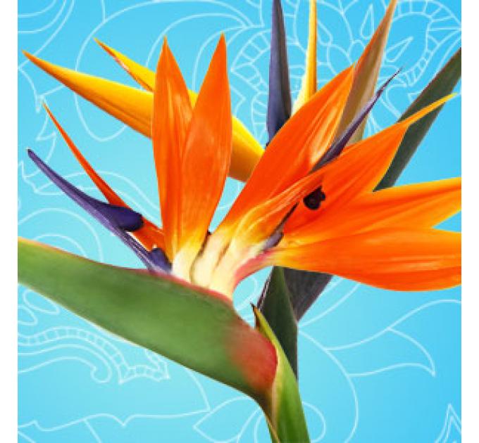 Райские птицы, ароматическое масло, 10 мл