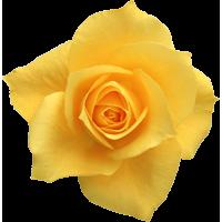 Воск розы , 10 гр